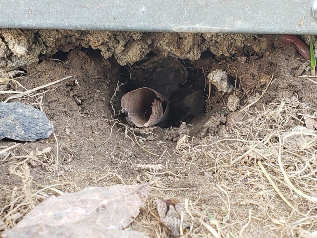 A pathway indicating an animal is living under the shed.